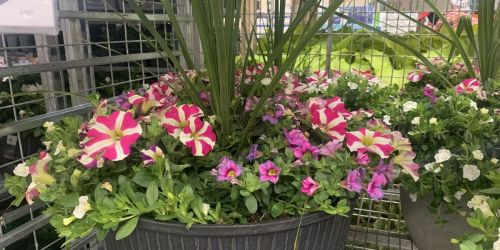 Costco Has New Flowers & Veggies Ready for Planting | Annuals, Perennials, & More