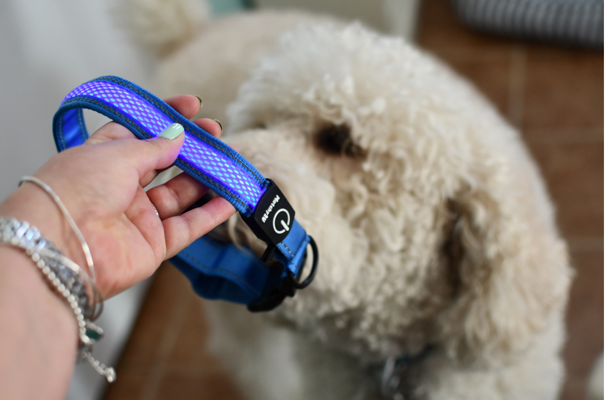 Dog sniffing a light up collar