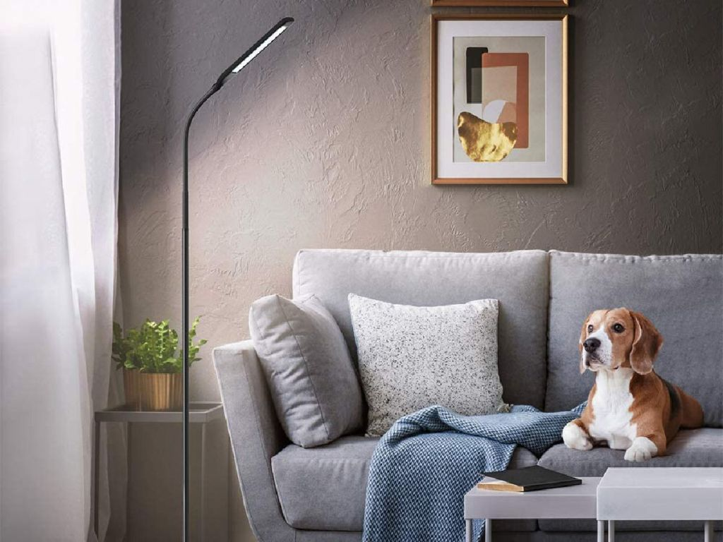 dog on couch next to a floor lamp