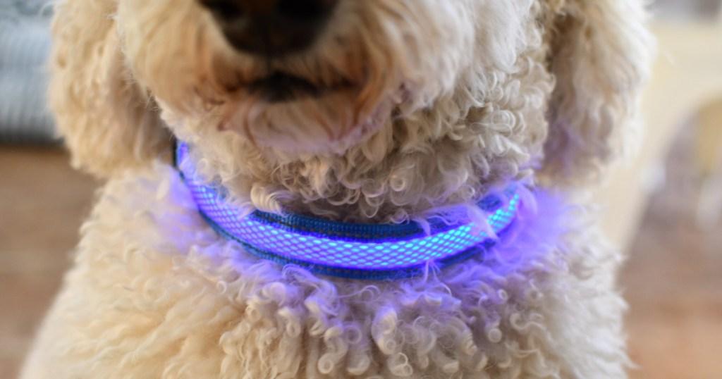 Dog wearing a light up collar