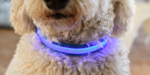 Rechargeable LED Dog Collar Only $8.99 on Amazon   Perfect for Visibility at Night