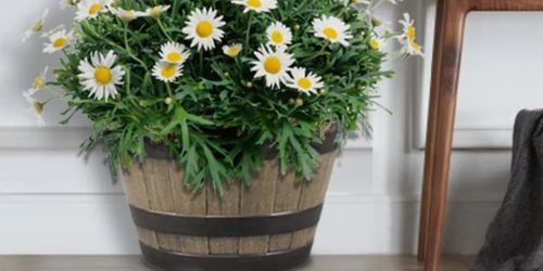 Oak Resin Barrel Planter Only $11.98 on Lowe's.com (Regularly $15)