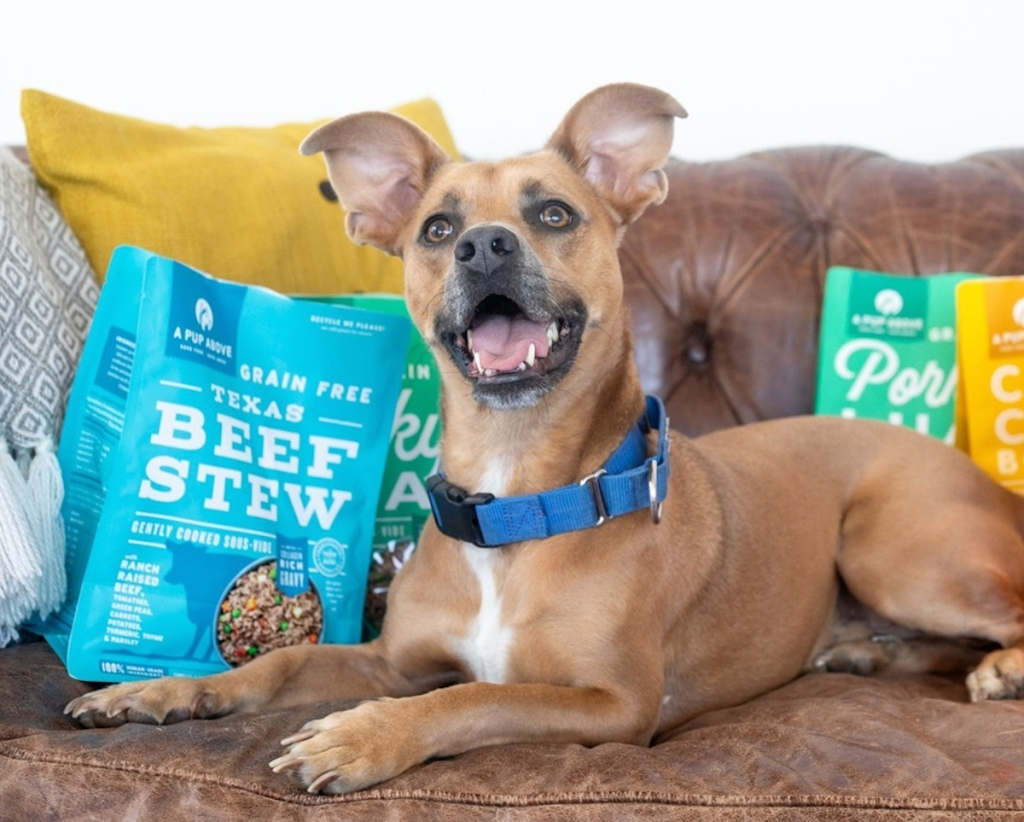 dog sitting on couch with bags of colorful dog food
