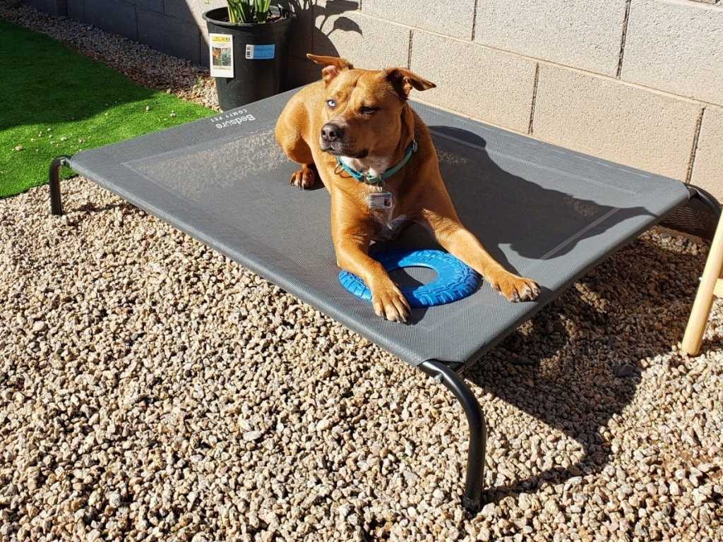 dog on elevated bed outside