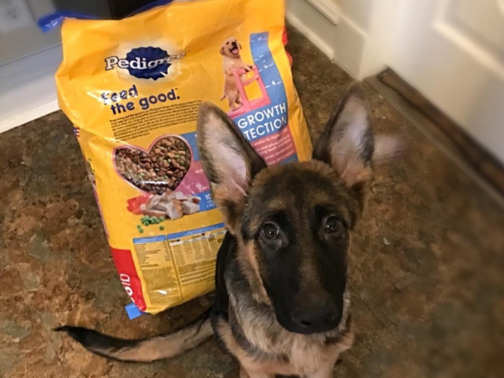 dog sitting in front of bag of dog food