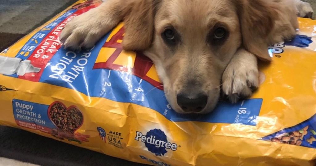 dog laying across bag of dog food