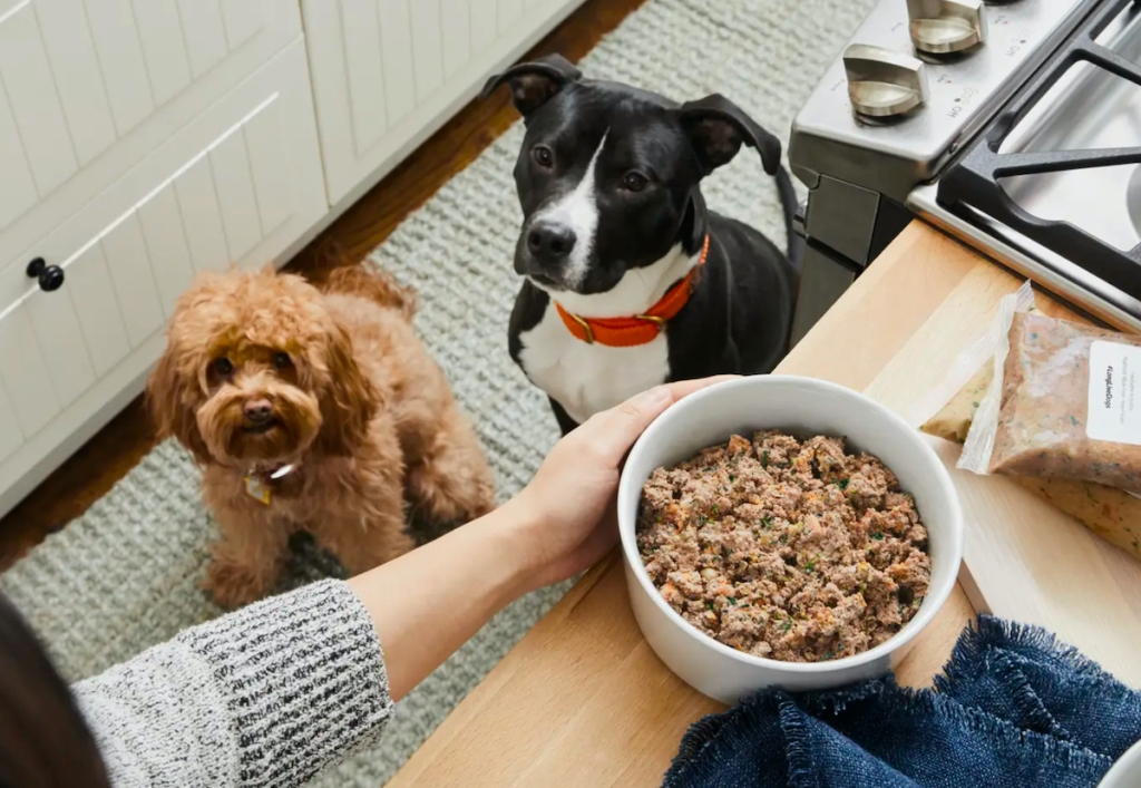 two dogs staring up at bowl of food on kitchen counter