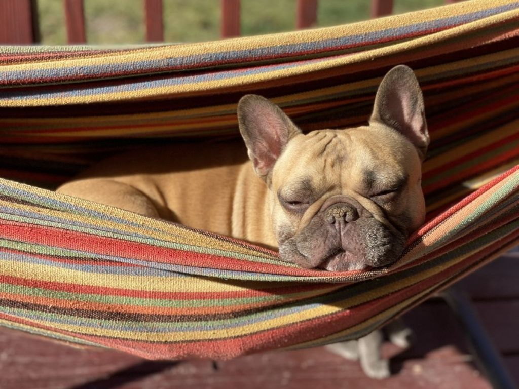 Dog laying in Best Choice Products Hammock