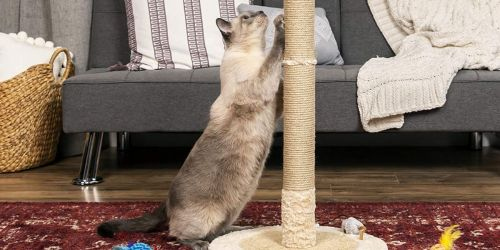 Rotating & Adjustable Cat Scratching Post w/ Toy Only $29.99 Shipped (Regularly $50)