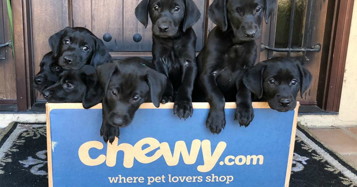 puppies in chewy box