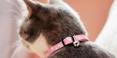 Up to 60% Off Pet Essentials on Chewy.com | Collars & Toys Under $4