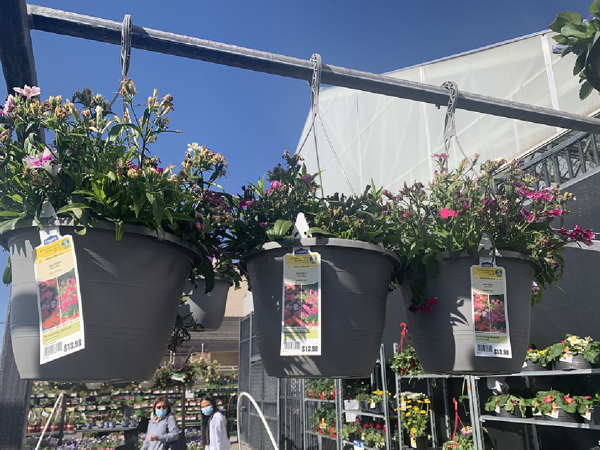 three hanging baskets of flowers with tags outside against a blue sky and store shelving