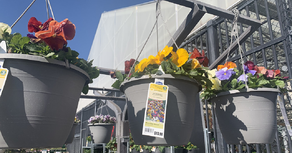 hanging baskets of flowers outdoors at lowes