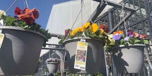 2 Hanging Flower Baskets Only $15 at Lowe's | Just $7.50 Each