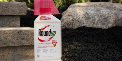 Roundup Weed & Grass Killer Concentrate Only $15.99 Shipped on Amazon (Regularly $25)