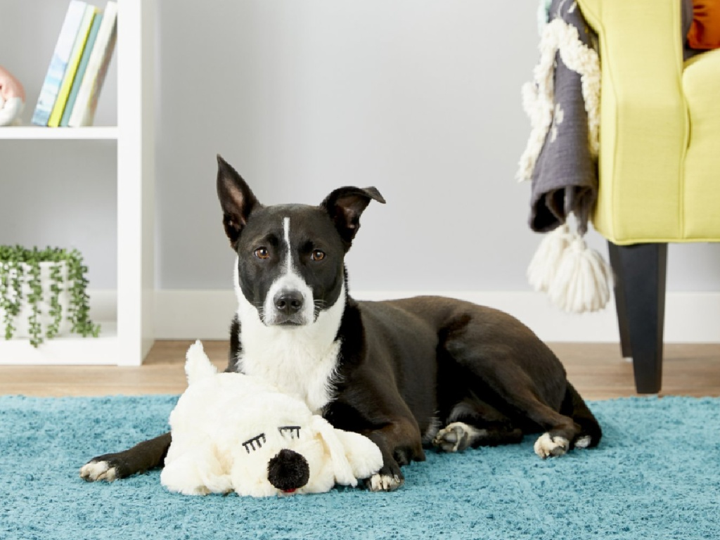 dog laying on the floor with snuggle pet