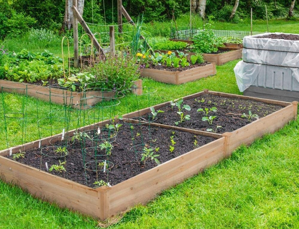 raised garden beds with plants in them