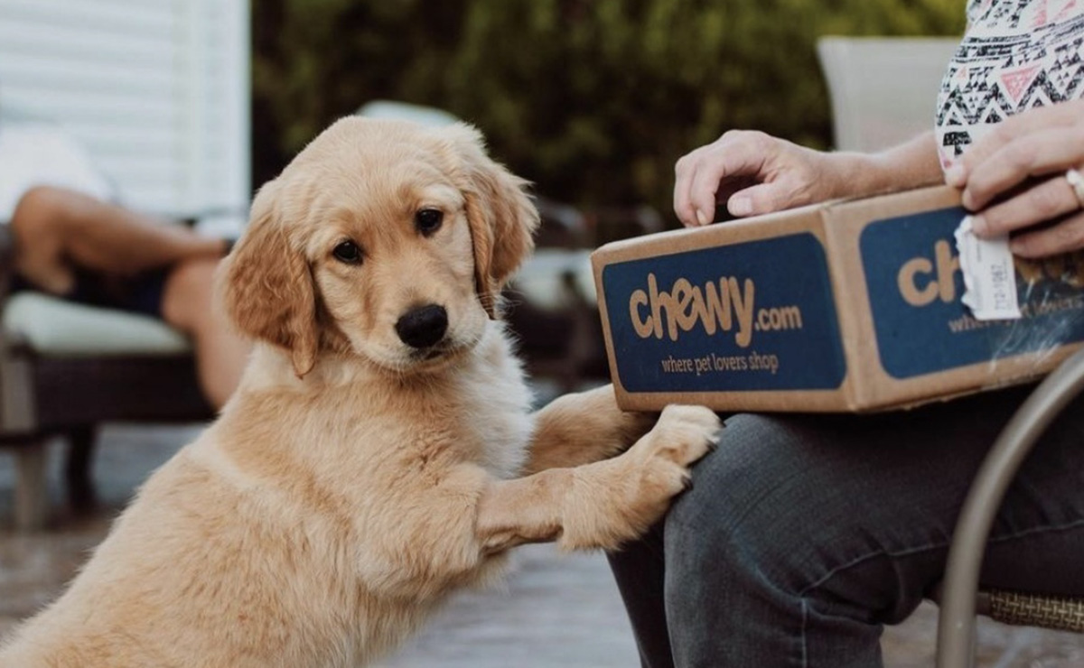 dog with chewy box