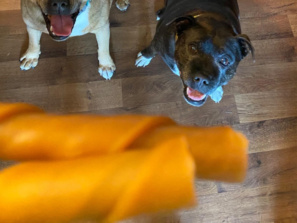 dogs looking at camera and treats