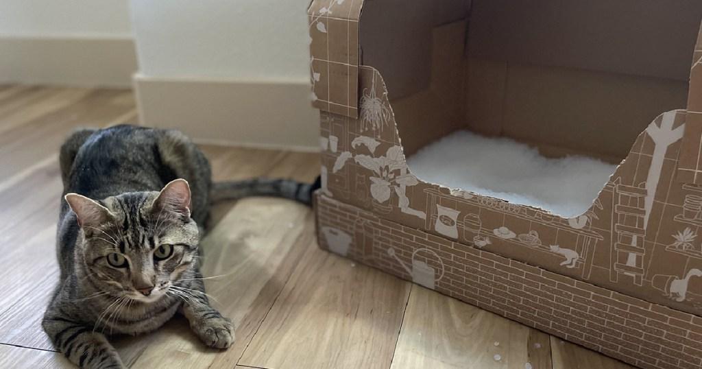 cat next to a cardboard litter box