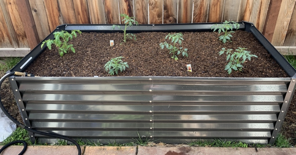 metal garden bed with tomato plants in it