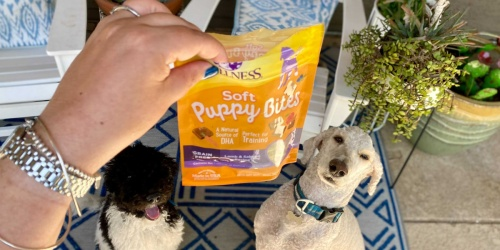 GO! Up to 75% Off Dog Treats on Chewy.com | Rachael Ray, SmartBones, & More