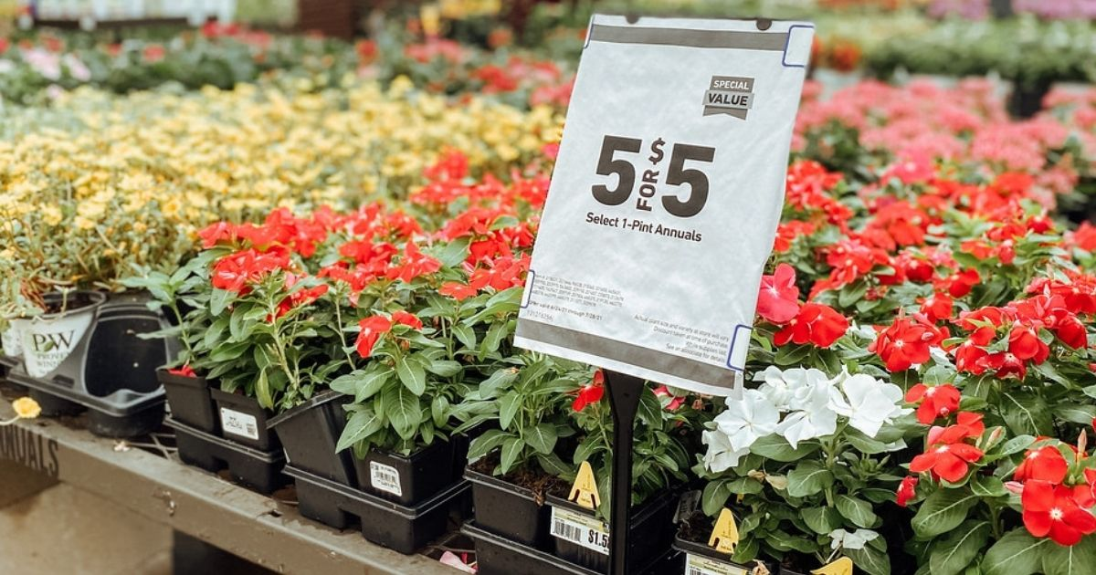 1-Pint Annuals Lowes