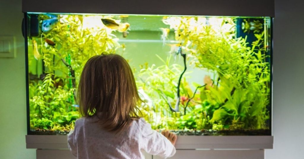 girl standing in front of a fish tank