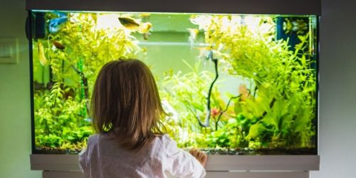 Aqueon Glass Aquarium Tanks from $10 on Petco.com w/ In-Store Pickup (Regularly $20)