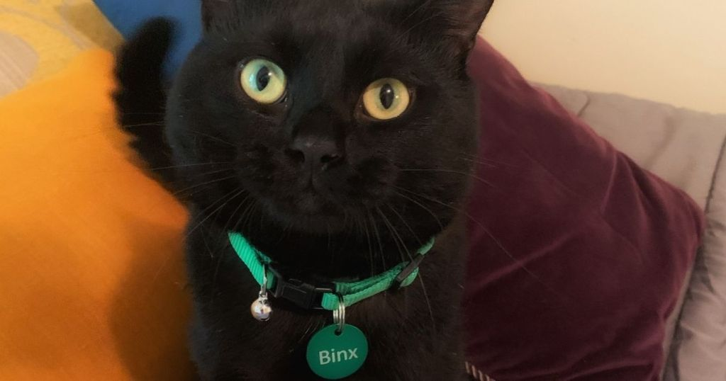 cat wearing collar with a tag