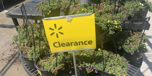 Add a Pop of Summer Color w/ Flower & Plant Clearance from $1.49 at Walmart
