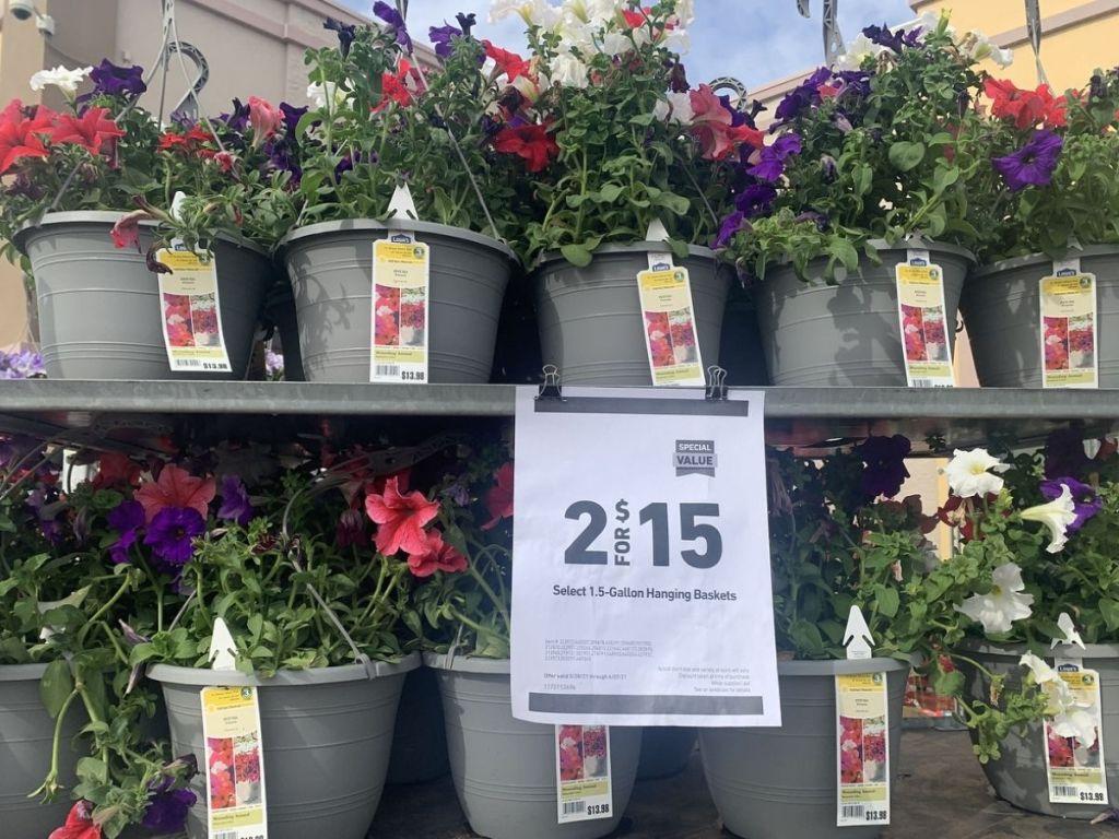 Hanging Flowers Lowe's