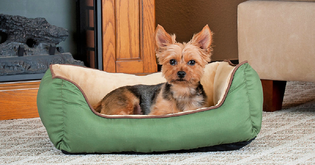 dog in green dog bed