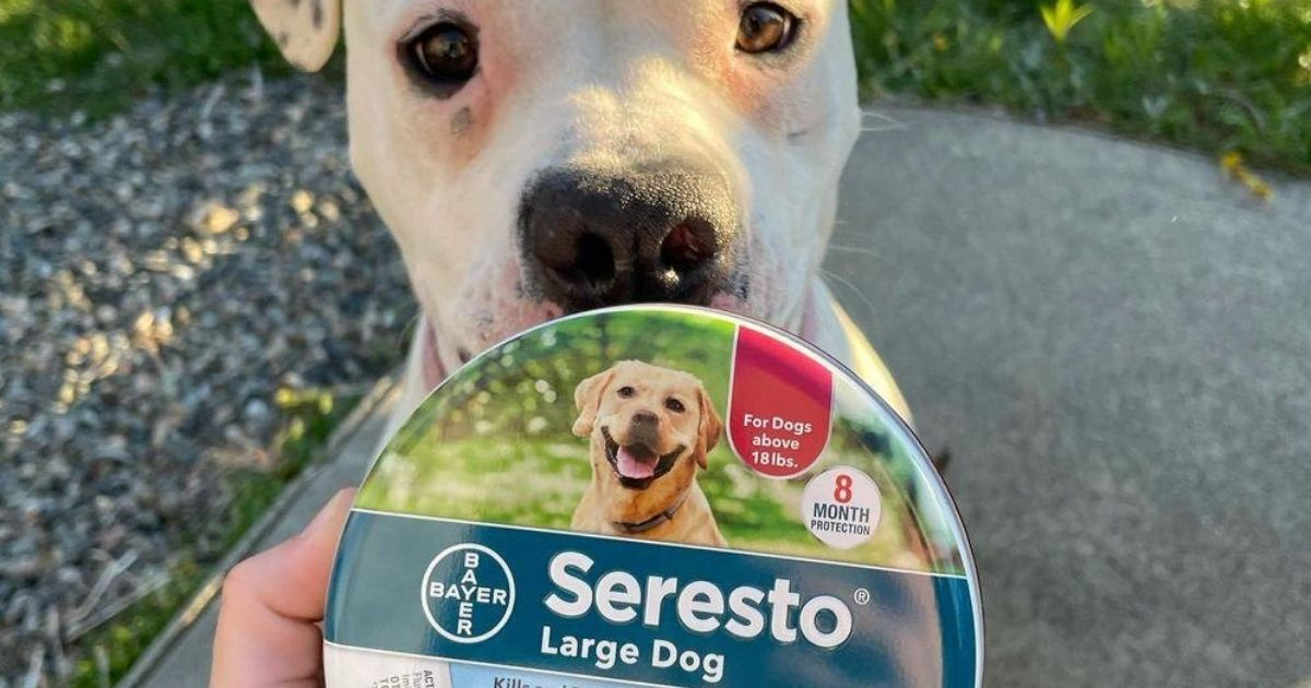 Seresto flea and tick collar in front of dog
