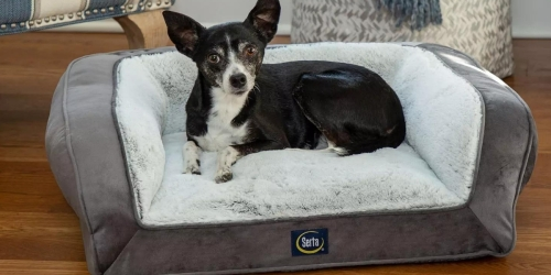 Serta Memory Foam Pet Bed Just $14.98 on SamsClub.com