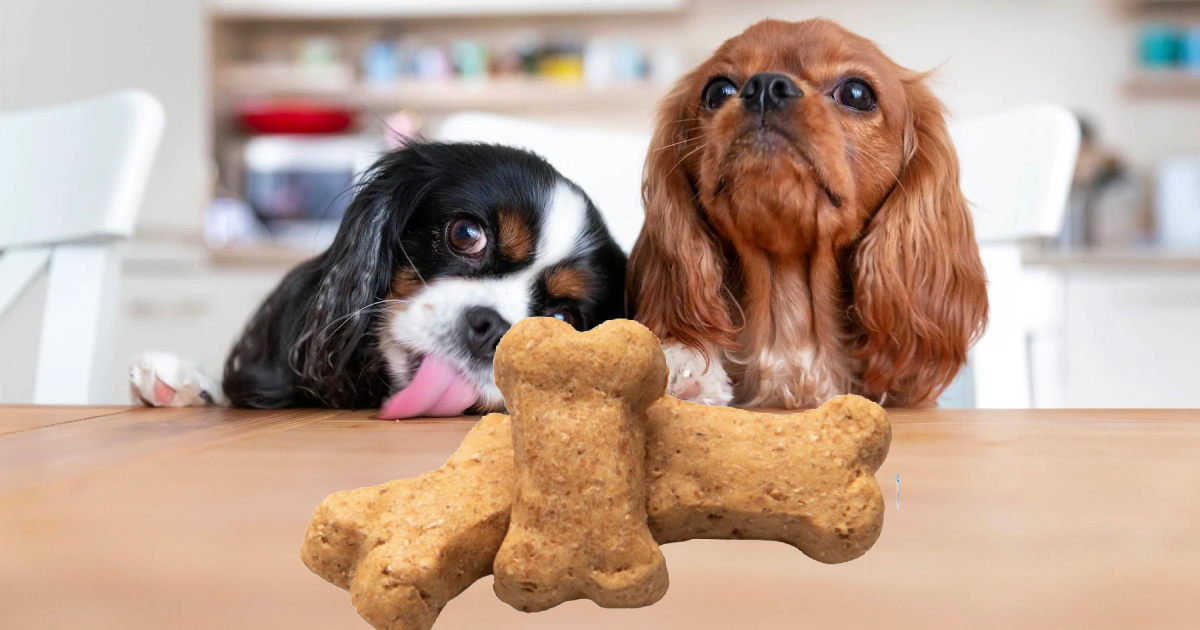two dogs behind a tabletop, looking at dog treats