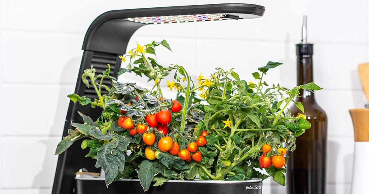 aerogarden black sprout indoor garden