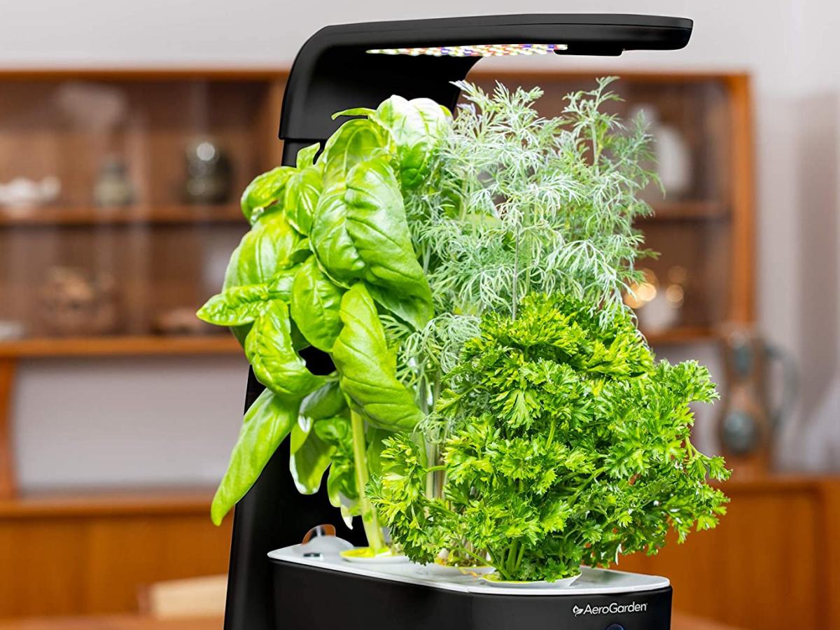 aerogarden black sprout indoor gardens