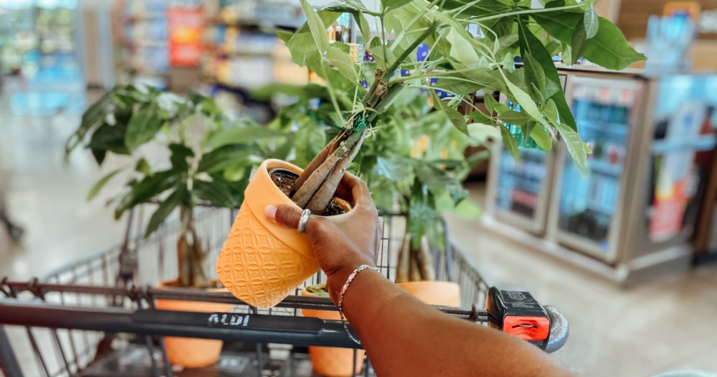 hand holding a money tree plant by shoppping cart