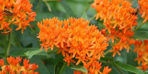 Request FREE Wildflower Seed Packs & Help Save Butterflies & Bees