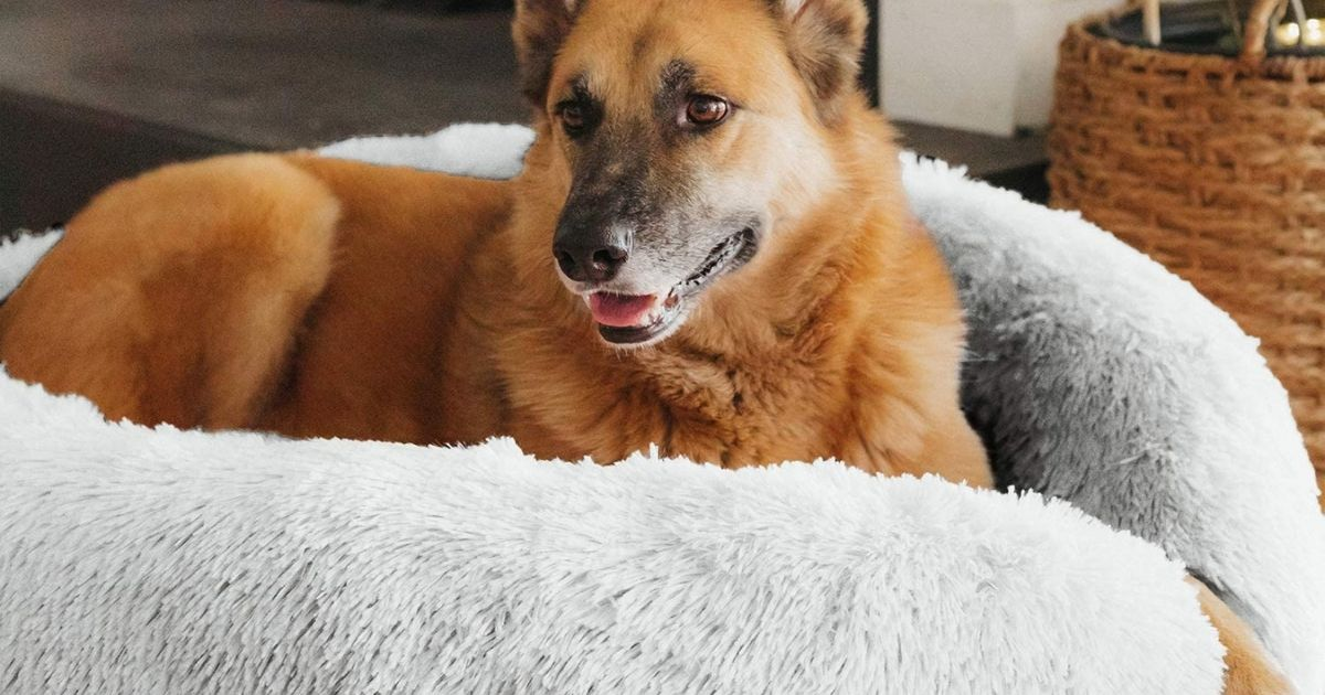 dog laying in white pet bed