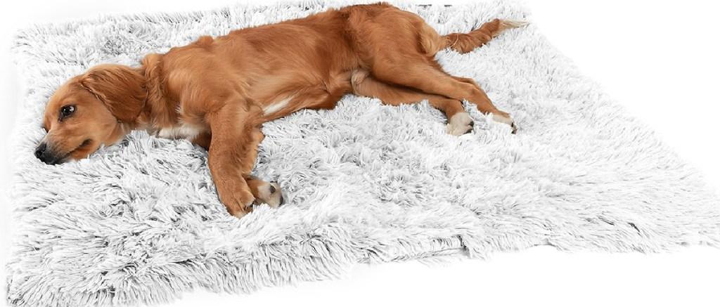 dog laying on shaggy blanket