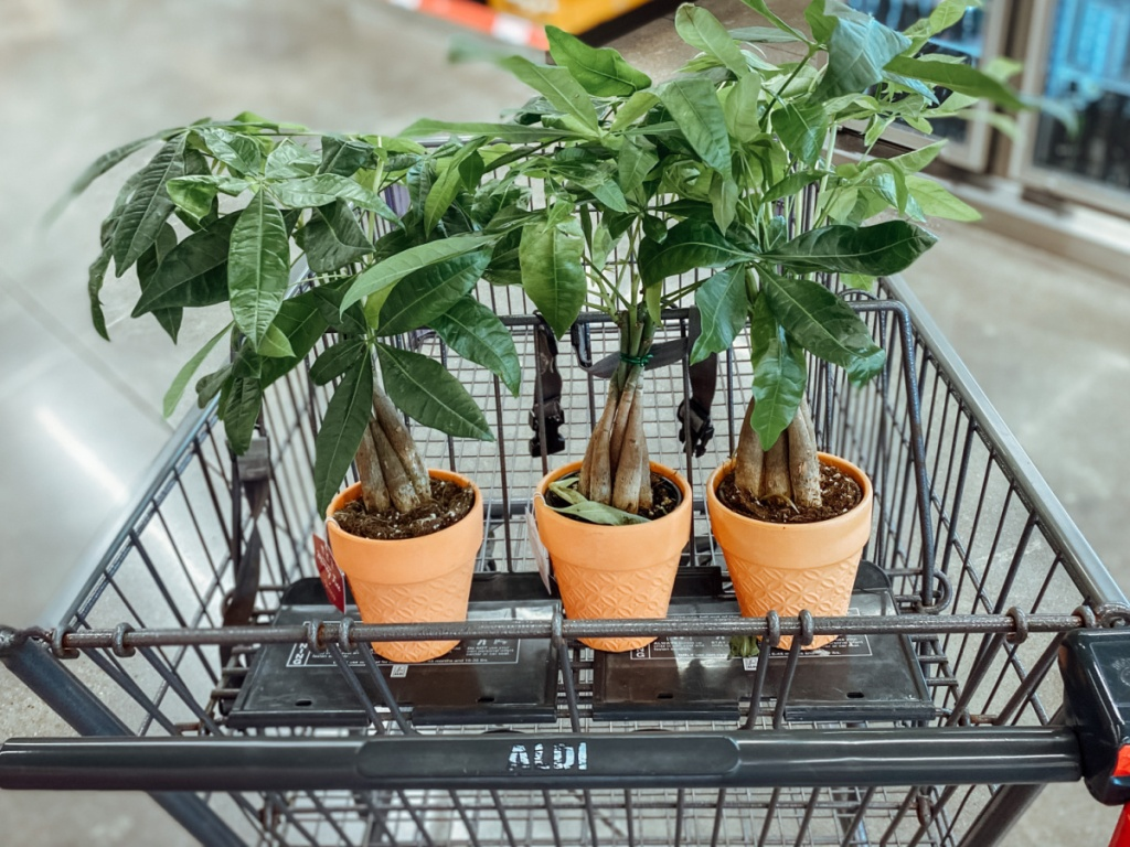 shopping cart with three small money trees in it
