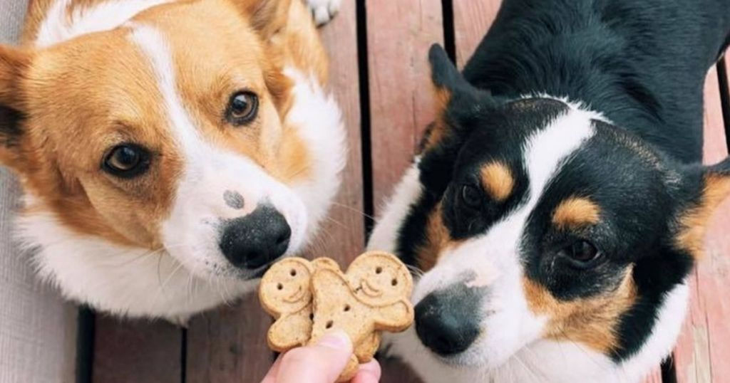 two dogs being given Buddy Biscuits
