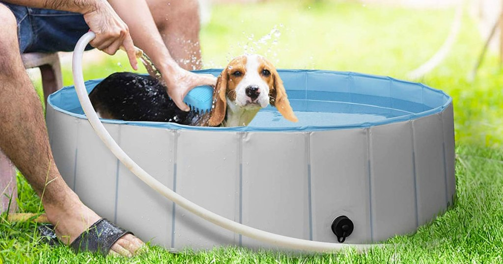 dog being washed in grey pool