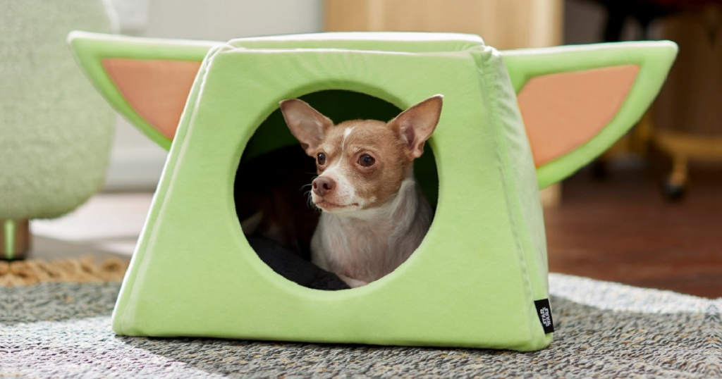small dog inside yoda dog bed