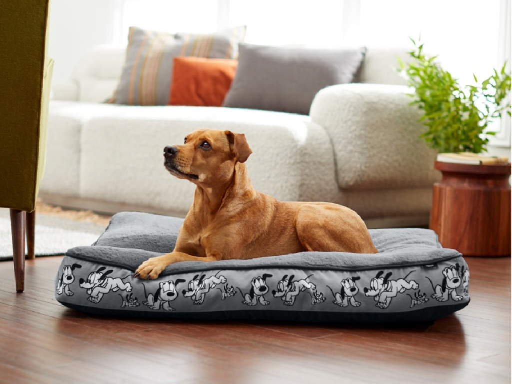 dog laying on a pluto pet bed