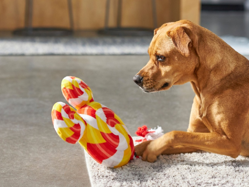 dog playing with stuffed mickey lollipop toy