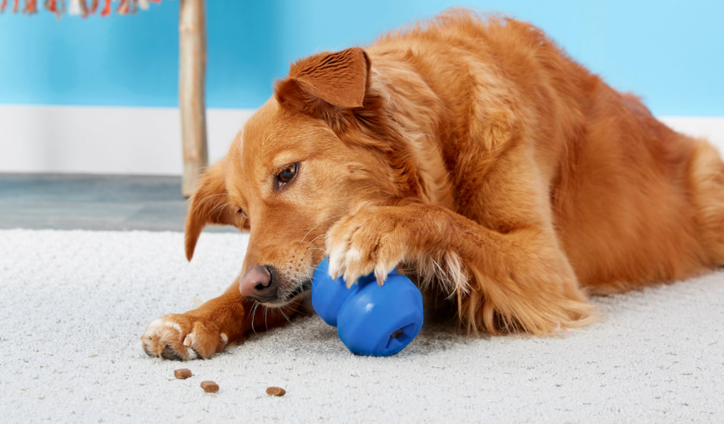 dog chewing on a toy