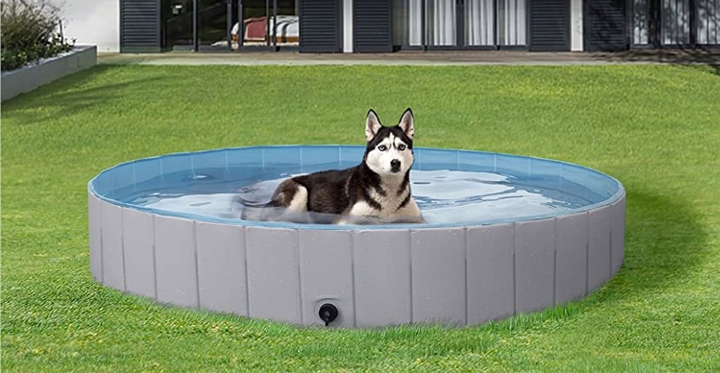husky laying in grey pool in backyard